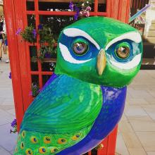 Minerva Owls of Bath Art Trail - Art Trail Project